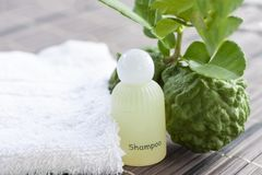 Shampoo made from bergamot helps inhibit hair loss, build strong hair roots. Shampoo made from bergamot helps inhibit hair loss, build strong hair roots, say stock photography