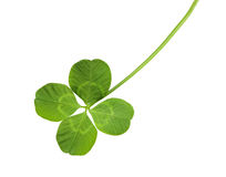 Free Shamrock Royalty Free Stock Photo - 11585665
