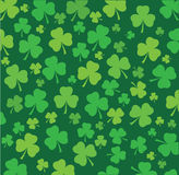 Shamrock Stock Photos