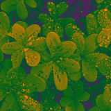 Shamrock. Abstract picture of some shamrocks Royalty Free Stock Photo