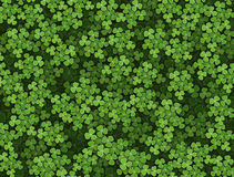Shamrock background Stock Photography