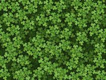 Shamrock background Stock Photography