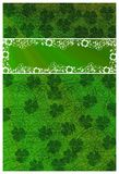 Shamrock background card Stock Images