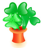 Shamrock in the Cylinder Hat Royalty Free Stock Image