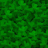 Shamrock field background with dew drops. Saint patrik's day realistic background. vector illustration Stock Images