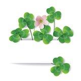 Shamrock flower and leaves Royalty Free Stock Image