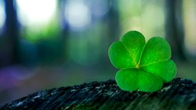Shamrock in forest stock video footage