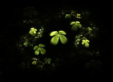 Shamrock, four leafed clover on black Royalty Free Stock Photo