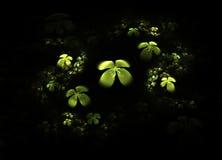 Shamrock, four leafed clover on black Royalty Free Stock Photo
