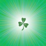 Shamrock Green Leaf Stock Photos