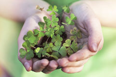 Shamrock in hands Stock Images