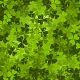 Shamrock Meadow Royalty Free Stock Photos