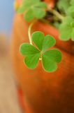 Shamrock in terracotta pot Royalty Free Stock Photos