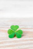 Shamrock on wooden table closeup with copy space Stock Image