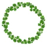 Shamrock Green Wreath. Irish Good Luck Charm Wreath Isolated on White Background. St. Patrick`s Day Design. Shamrock Wreath Isolated on White Background. Irish Stock Photo