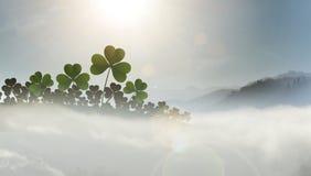 Shamrocks в тумане Стоковые Изображения
