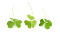 Shamrocks Foto de Stock Royalty Free