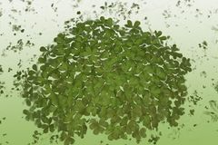 Shamrocks. Abstract of green shamrocks over green gradient Royalty Free Stock Photography