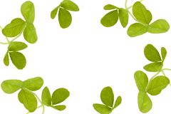 Shamrocks Royalty Free Stock Image