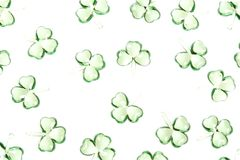 Shamrocks background Stock Images
