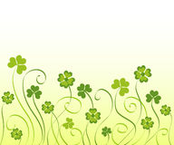 Shamrocks and clovers Royalty Free Stock Images