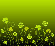 Shamrocks and clovers Royalty Free Stock Photo