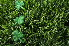 Shamrocks In The Grass Stock Images