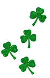 Shamrocks On Vertical White Background Stock Photography