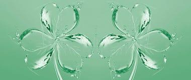 shamrocks woda dwa Zdjęcia Stock
