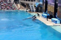 Shamu Show, SeaWorld, San diego, California Royalty Free Stock Images