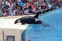 Shamu Show, SeaWorld, San diego, California Stock Photography