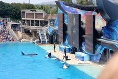 Shamu Show, SeaWorld, San diego, California Stock Image