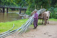 Burmese farmer riding ox cart. SHAN STATE , MYANMAR - SEP 06: Burmese farmer riding ox cart in Shan state Myanmar on September 06 2017 ,  Ox carts are widely Stock Photography