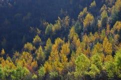 Shangei la的,云南,中国美丽的五颜六色的秋天森林 免版税库存照片