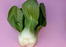 Shanghai Bok Choy, Brassica rapa subsp chinensis. Popular Asian vegetable with jade colored stalks with swollen sheaths and pale green soupspoon like leaves Royalty Free Stock Photo