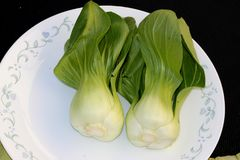 Shanghai Bok Choy, Brassica rapa subsp chinensis. Popular Asian vegetable with jade colored stalks with swollen sheaths and pale green soupspoon like leaves Royalty Free Stock Images