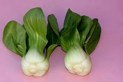 Shanghai Bok Choy, Brassica rapa subsp chinensis. Popular Asian vegetable with jade colored stalks with swollen sheaths and pale green soupspoon like leaves Stock Photography