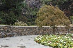 Shanghai Chenshan botanical garden Royalty Free Stock Image