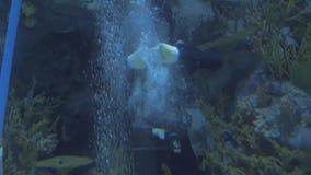 Shanghai, China 20 Januari, 2019: De scuba-duiker is in het grote aquarium overgaan golvend zijn hand stock videobeelden