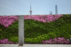 The Wall of Flowers in the Bund, Shanghai, China. SHANGHAI, CHINA - MAY 04, 2016: The Wall of Flowers in the Bund area in Shanghai. Pudong view in background Stock Image