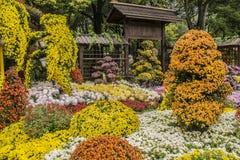 Shanghai Chrysanthemum Show Stock Photography