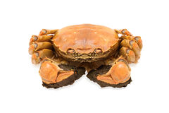 Shanghai hairy crab Stock Photos