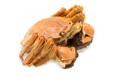 Shanghai hairy crab Royalty Free Stock Images