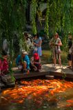 Shanghai Kina - JUNI 17, 2017: fiskar den matande karpen för folk på Royaltyfri Bild