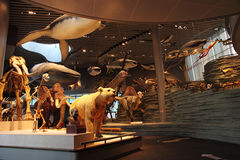 Shanghai Natural History Museum. Royalty Free Stock Photos