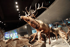 Shanghai Natural History Museum. stock photo