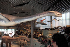 Shanghai-Naturgeschichtliches Museum Stockbild
