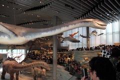 Shanghai naturhistoriamuseum Fotografering för Bildbyråer