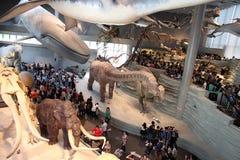 Shanghai naturhistoriamuseum Royaltyfria Bilder