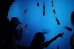 Shanghai Ocean Aquarium. Children watching marine life of octopuses in Shanghai Ocean Aquarium, China royalty free stock photos